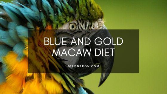 Régime d'ara bleu et or chez les animaux sauvages, animaux de compagnie et captifs