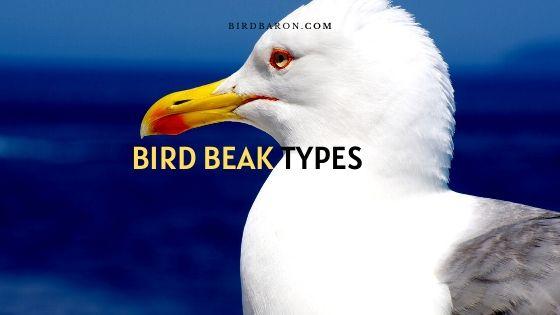 Diferentes tipos de picos de aves