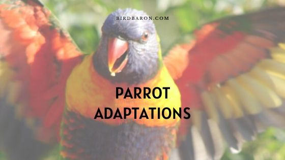 Parrot Adaptations - How Do Parrots Survive?