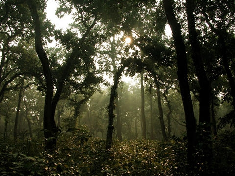East Himalayan deciduous forests